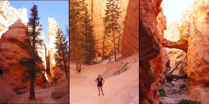 Navajo Trail : descente dans le Canyon