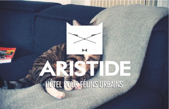 Aristide : l'hôtel pour chats urbains à Paris !