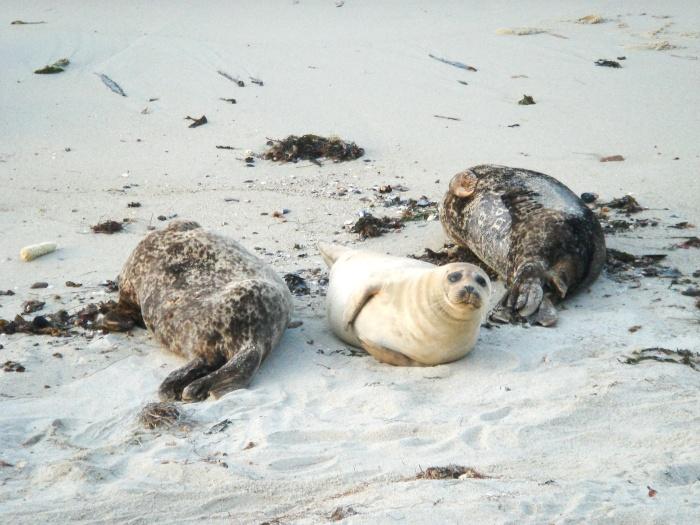 Sea lions La Jolla