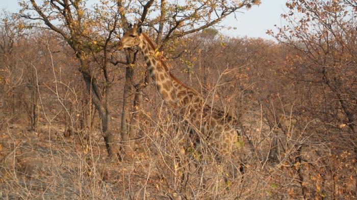 Voyage de noces Afrique
