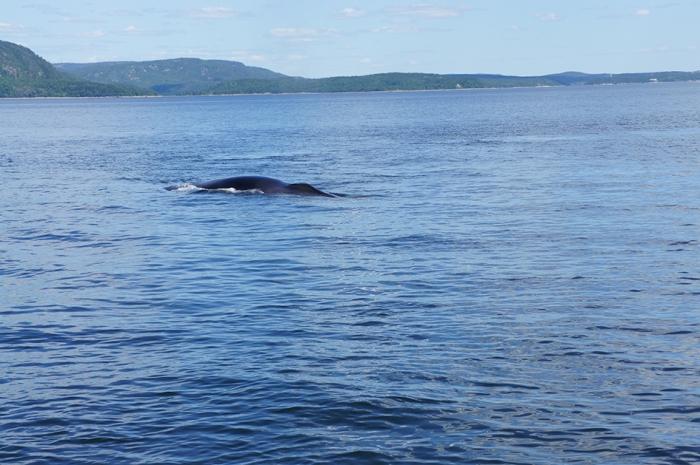 Saurez-vous trouver la baleine ?