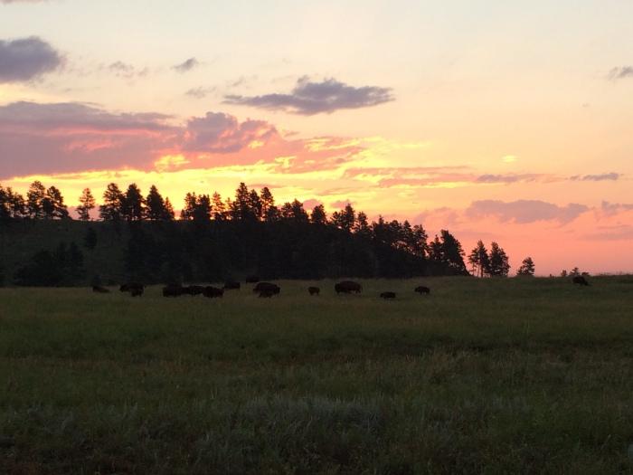 Au lever du soleil sur la Wildlife Road