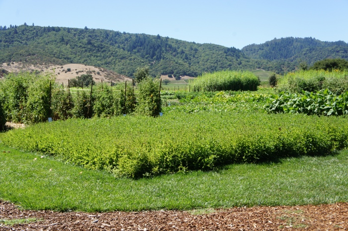 Nappa Valley Californie wine country