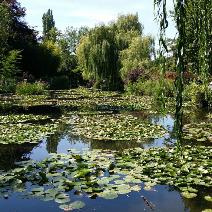 Le bassin de nénuphars qui aura inspiré les Nymphéas à Claude Monet