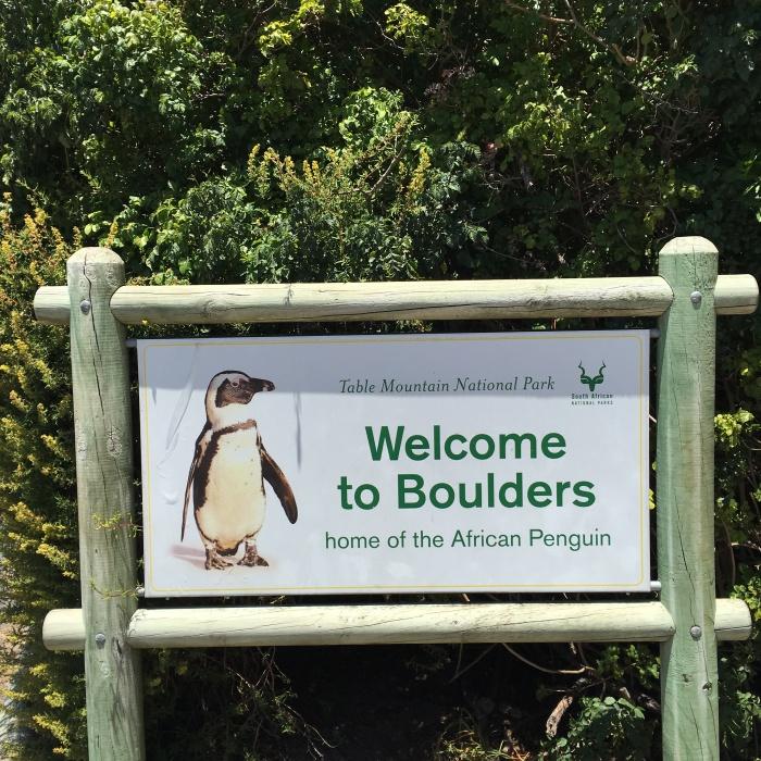 pingouins_boulders_beach