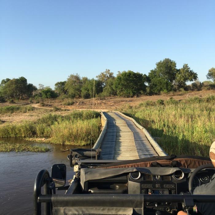 safari_lion_sand_blog_voyage_ailleurs_is_better